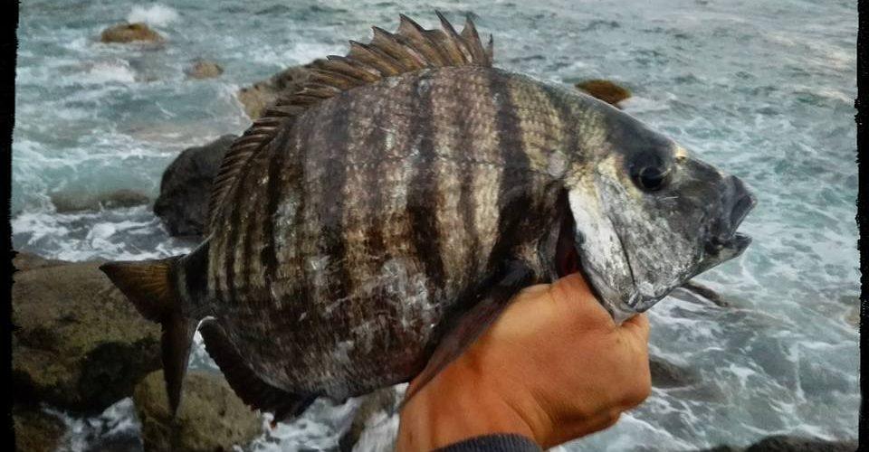 Seguimos con el Rockfishing, ultimas capturas!! Julio