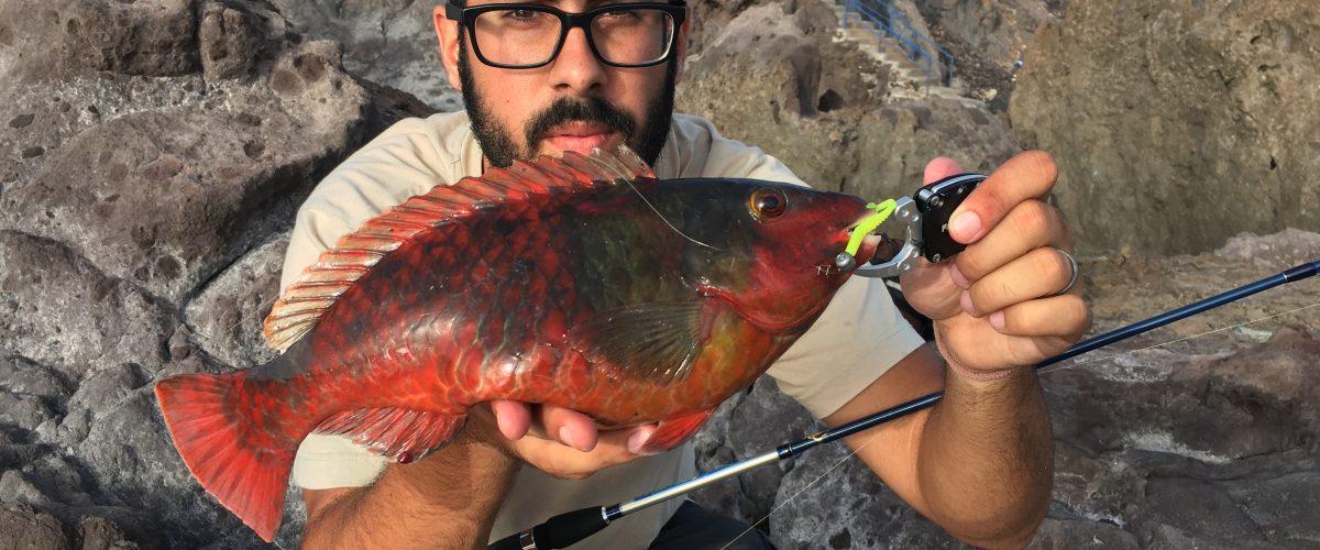 La vieja, un pez complicado a Light Rockfishing.